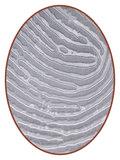 Edelstalen Vingerafdruk Gedenkhanger - VI002_